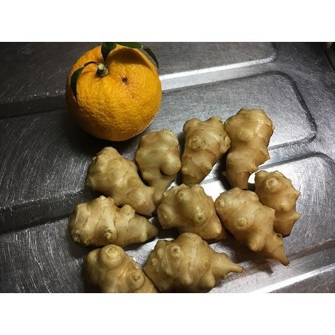 【無農薬栽培】菊芋(キクイモ)(20個)※料理レシピ付き野菜|itomedetashi|06