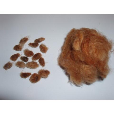 【無農薬栽培】綿の種「赤綿」(30粒)※栽培説明書付き|itomedetashi|02