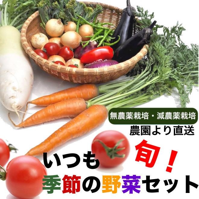 無農薬 有機栽培 日時指定 季節の野菜セットおまかせ詰め合わせ 農園直送 6-7品目 信用 送料無料