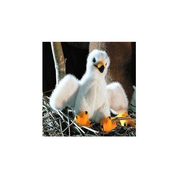 """テディベア ぬいぐるみ ワシの子 KOSEN(ケーセン社) 17cm """"Toni"""" Bald Eagle Chick/鳥/ぬいぐるみ"""