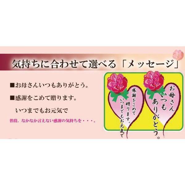 母の日ギフト 私の気持ちカーネーションキャンディー|iwaiseika|04