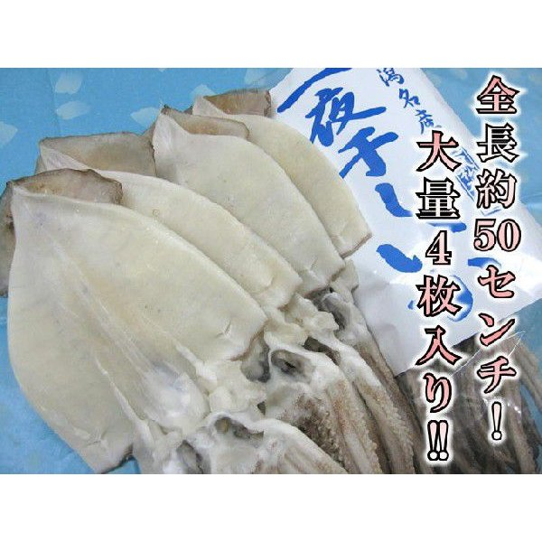 一夜干しイカ4枚 新潟名物 日本海のイカ 送料別 お取り寄せグルメ|iwamatsu-salmon|02