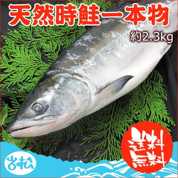 天然時鮭 一本物 約2.3kg 超激安特価 40%OFFの激安セール お取り寄せグルメ 7月16日以降の出荷になります 送料無料