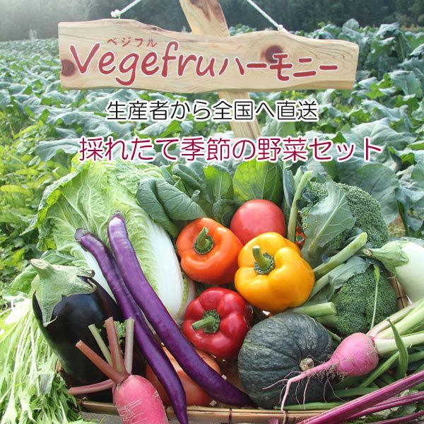 季節の野菜セット 7〜8点詰合せ ロ 高級 野菜ソムリエ Vege 産直 期間限定送料無料 fruハーモニー 冬野菜 旬の野菜詰合せ 新鮮