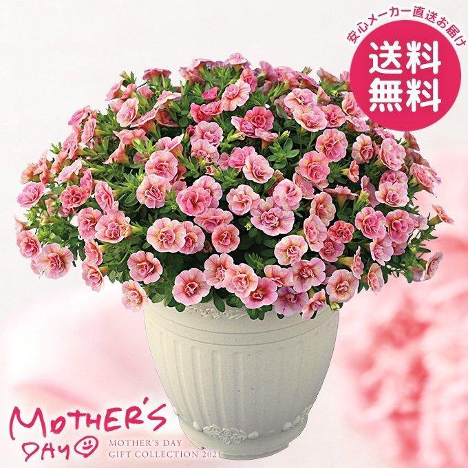 八重咲きカリブラコア鉢植え ピーチイエロー