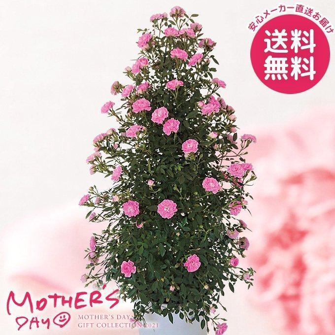舞姫・MAIHIME(薔薇スタンド仕立て)