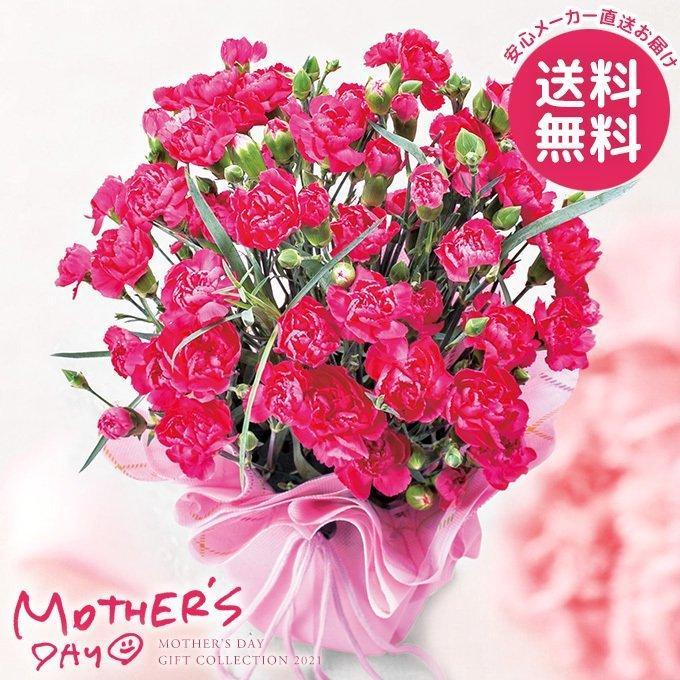 カーネーション鉢植え ピンク