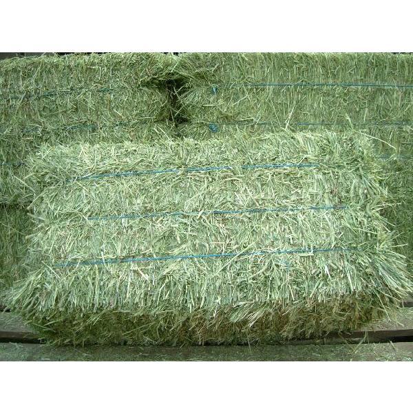 *new crop*2021年産(1kg)アメリカ産プレミアムホースチモシー1番刈り:シングルプレス(ウサギ等小動物向け牧草) japax-ibaraki 02