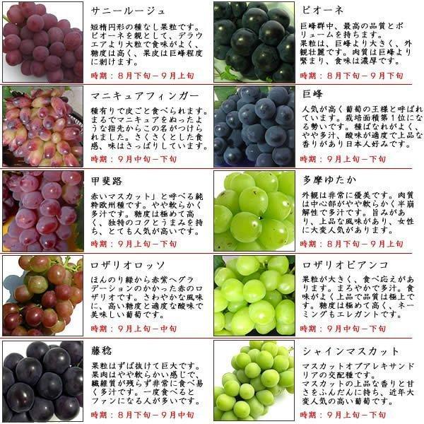 お中元 御中元 ギフト フルーツ ぶどう 葡萄 ブドウ ハウス シャインマスカット|jerichojericho|02