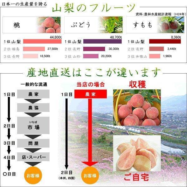 お中元 御中元 ギフト フルーツ ぶどう 葡萄 ブドウ ハウス シャインマスカット|jerichojericho|05