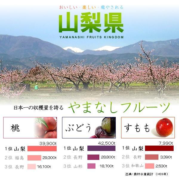 お中元 御中元 ギフト フルーツ ぶどう 葡萄 ブドウ ハウス シャインマスカット|jerichojericho|07