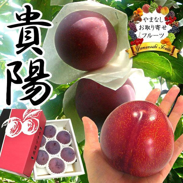 お中元 フルーツ すもも プラム ギフト 山梨産 貴陽(きよう)スモモ キヨウ|jerichojericho