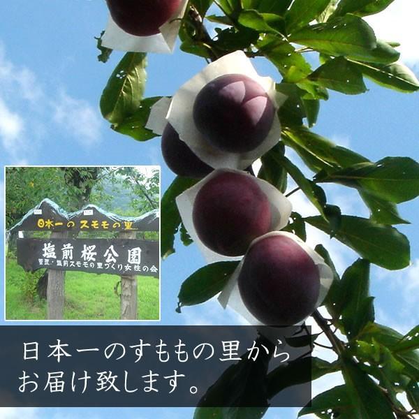 お中元 フルーツ すもも プラム ギフト 山梨産 貴陽(きよう)スモモ キヨウ|jerichojericho|02