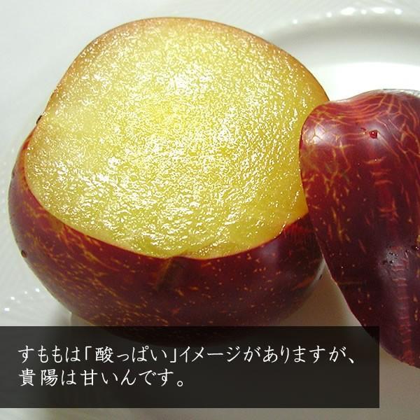 お中元 フルーツ すもも プラム ギフト 山梨産 貴陽(きよう)スモモ キヨウ|jerichojericho|03