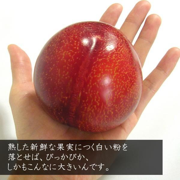 お中元 フルーツ すもも プラム ギフト 山梨産 貴陽(きよう)スモモ キヨウ|jerichojericho|04