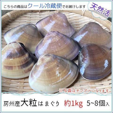 房州産大粒はまぐり 約1kg5~8個 お中元・お歳暮 jf-higashiawa