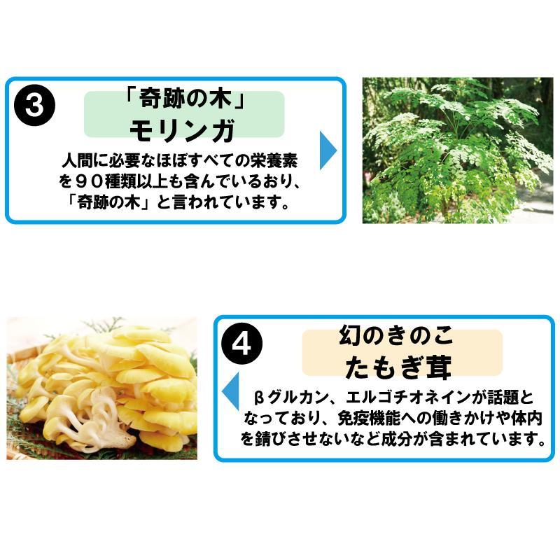 青汁 乳酸菌 130億超 国産 大麦若葉 モリンガ たもぎ茸 食物繊維 健康 ダイエット 青汁カプセル 送料無料|jun-global|05