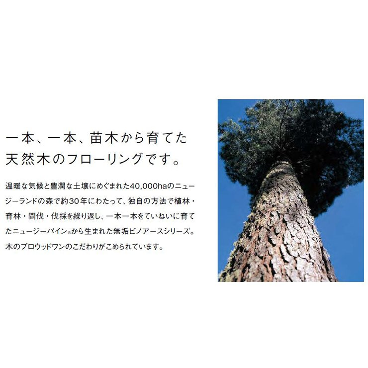 無垢フローリング ピノアース 6尺タイプ  1818×91×12.0mm 20枚 3.31平米 1坪入 自然塗料クリア色ウッドワン WOODONE jyu-tus 07