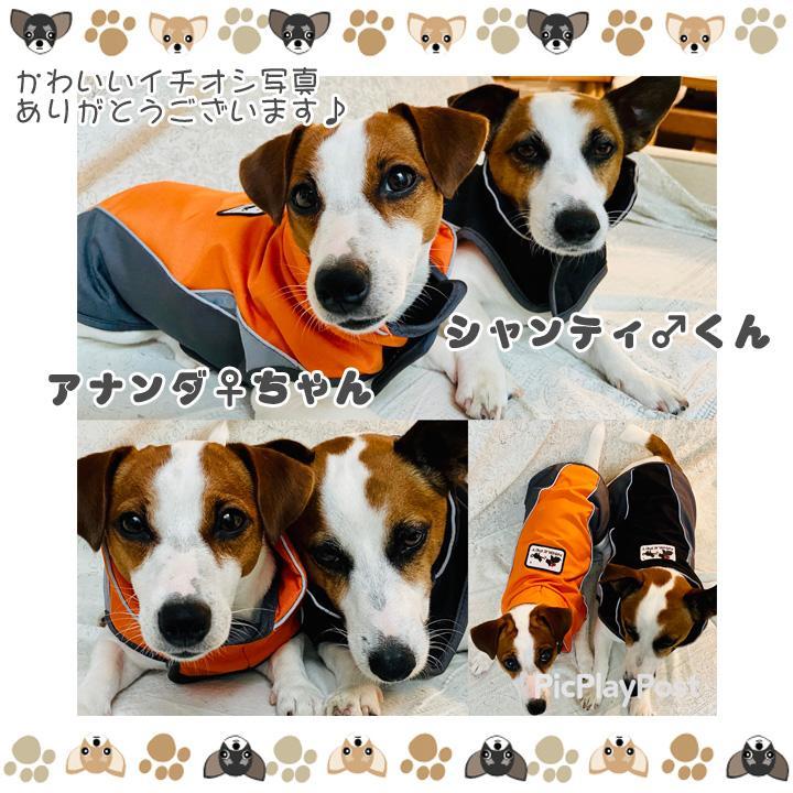 着せやすい犬用レインコート 犬 服 犬服 犬の服  トイプードル チワワ 着せやすい レインコート 雨 ドッグウェア カッパ マジックテープ 雨具 お出かけ 送料無料|k-city|11