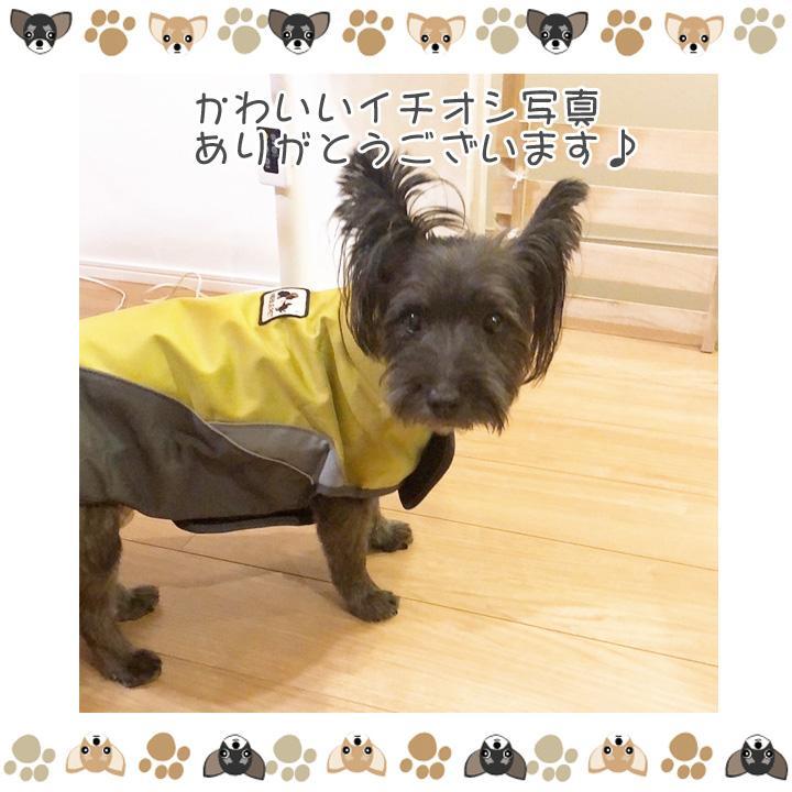 着せやすい犬用レインコート 犬 服 犬服 犬の服  トイプードル チワワ 着せやすい レインコート 雨 ドッグウェア カッパ マジックテープ 雨具 お出かけ 送料無料|k-city|12