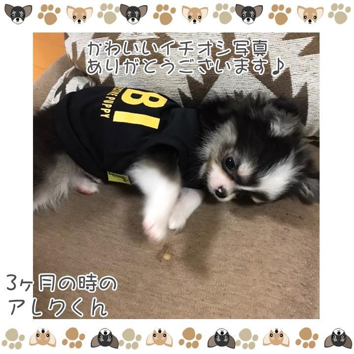 犬 服 犬服 犬の服 おしゃれ トイプードル チワワ ドッグウェア タンクトップ FBI 送料無料|k-city|11