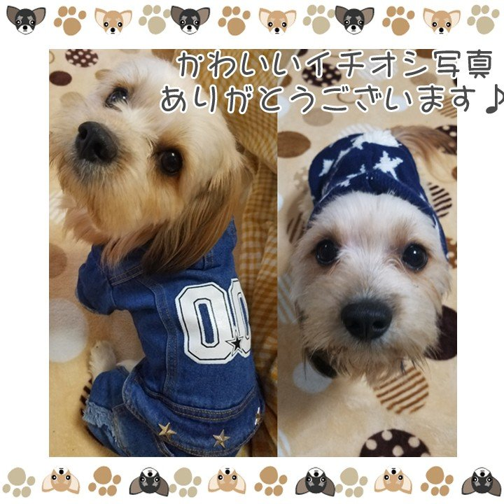 犬 服 犬服 犬の服 おしゃれ トイプードル チワワ ドッグウェア つなぎ オーバーオール カバーオール ロンパース デニム 送料無料|k-city|07