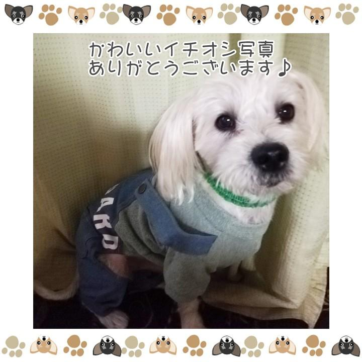 犬 服 犬服 犬の服 おしゃれ トイプードル チワワ ドッグウェア つなぎ オーバーオール カバーオール ロンパース デニム 送料無料|k-city|08