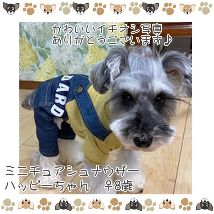 犬 服 犬服 犬の服 おしゃれ トイプードル チワワ ドッグウェア つなぎ オーバーオール カバーオール ロンパース デニム 送料無料|k-city|09