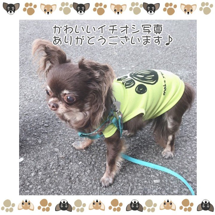 犬 服 犬服 犬の服 おしゃれ トイプードル チワワ タンクトップ 足跡柄 ドッグウェア|k-city|13