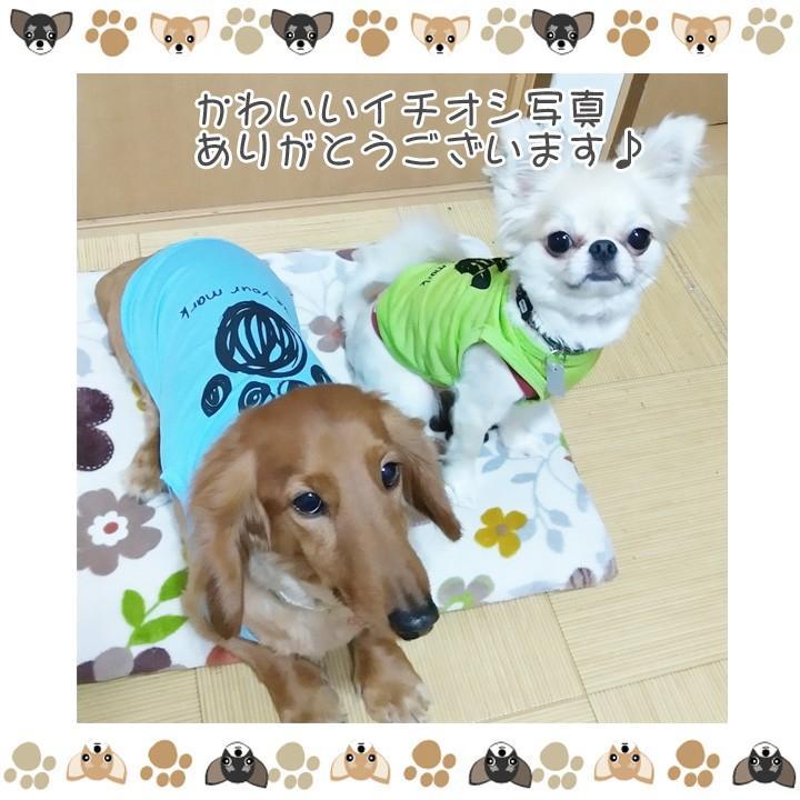 犬 服 犬服 犬の服 おしゃれ トイプードル チワワ タンクトップ 足跡柄 ドッグウェア|k-city|17