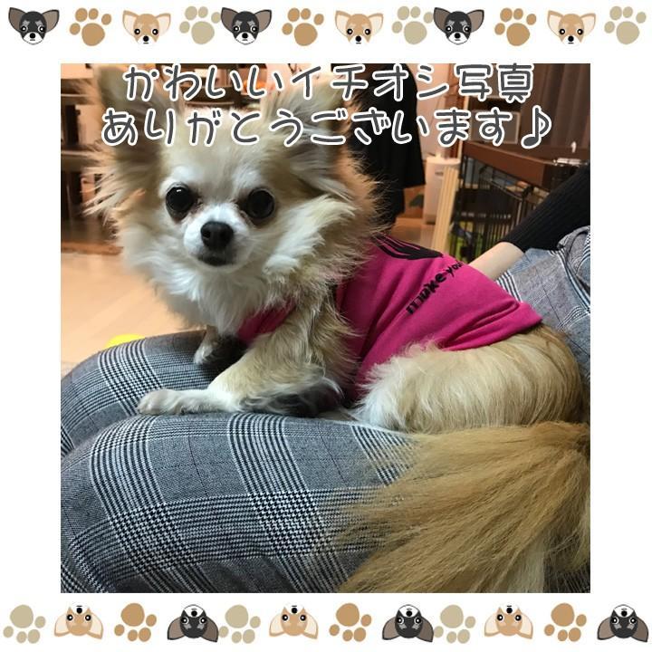 犬 服 犬服 犬の服 おしゃれ トイプードル チワワ タンクトップ 足跡柄 ドッグウェア|k-city|08