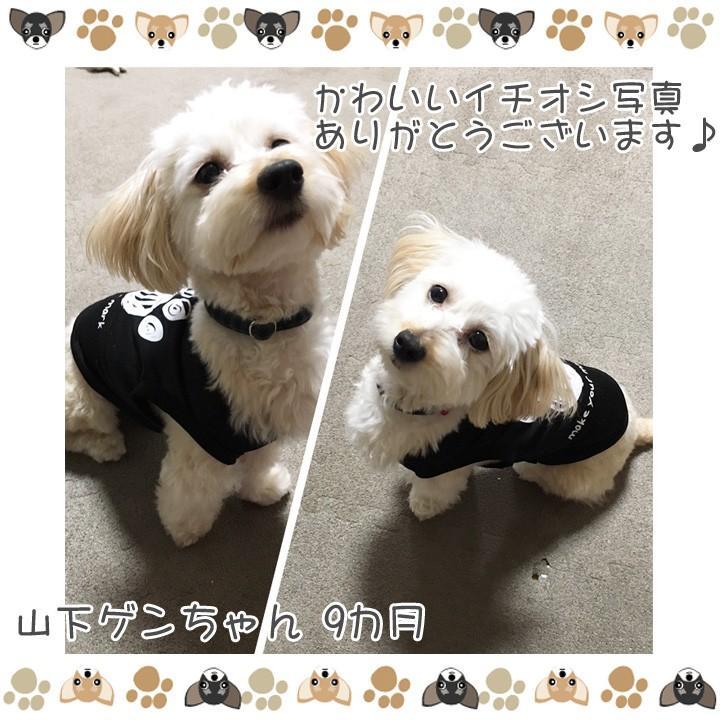 犬 服 犬服 犬の服 おしゃれ トイプードル チワワ タンクトップ 足跡柄 ドッグウェア|k-city|09