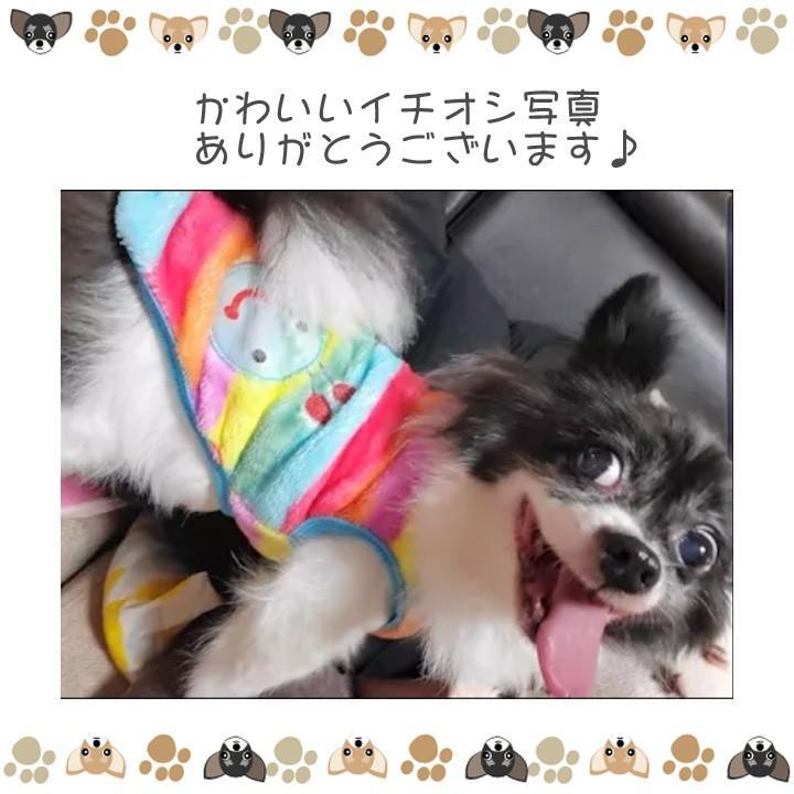 犬 服 犬服 犬の服 おしゃれ トイプードル チワワ タンクトップ カラフル ドッグウェア|k-city|11