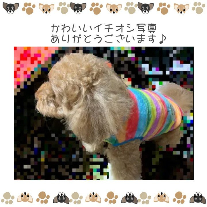 犬 服 犬服 犬の服 おしゃれ トイプードル チワワ タンクトップ カラフル ドッグウェア|k-city|12