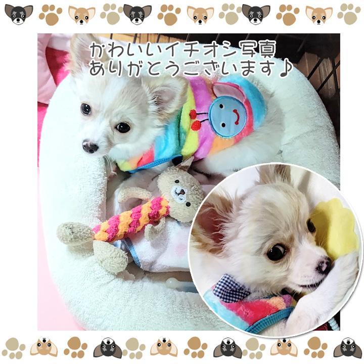 犬 服 犬服 犬の服 おしゃれ トイプードル チワワ タンクトップ カラフル ドッグウェア|k-city|16