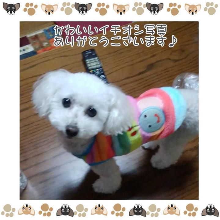 犬 服 犬服 犬の服 おしゃれ トイプードル チワワ タンクトップ カラフル ドッグウェア|k-city|17