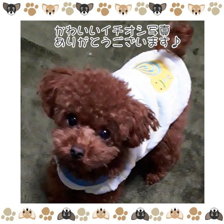 犬 服 犬服 犬の服 おしゃれ トイプードル チワワ タンクトップ カラフル ドッグウェア|k-city|08