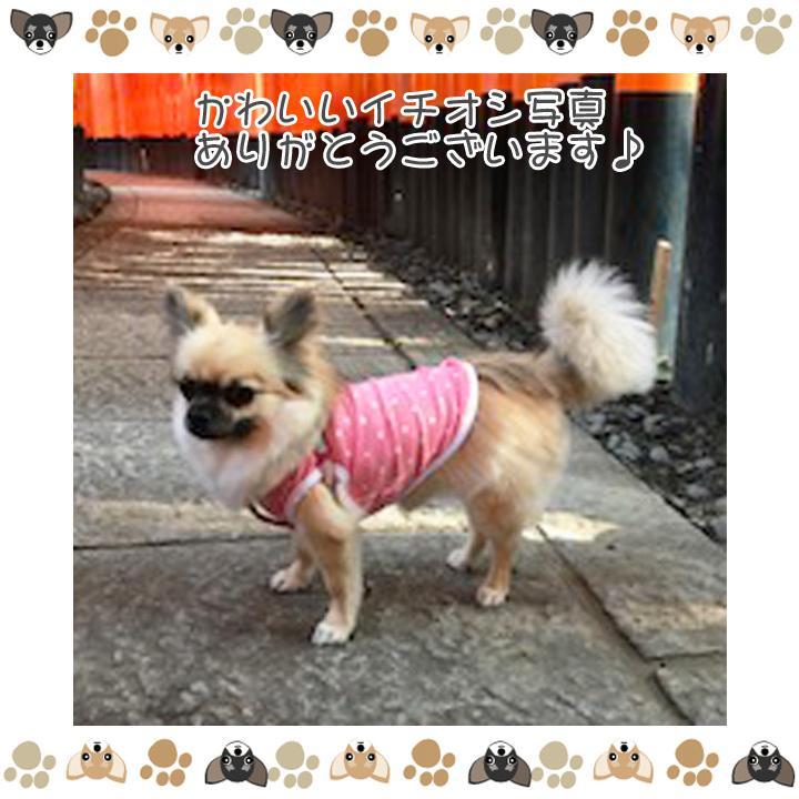 犬 服 犬服 犬の服 おしゃれ トイプードル チワワ タンクトップ ボーダー クラシック ドッグウェア|k-city|08
