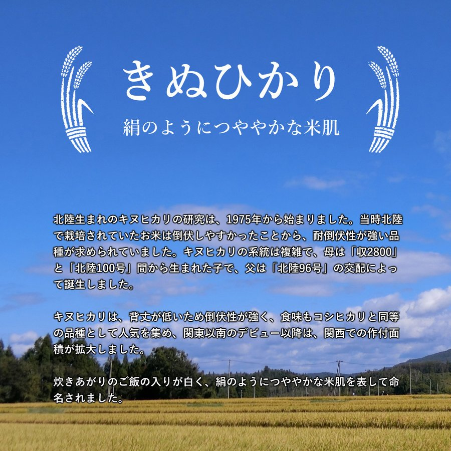 米 お試し 送料無料 和歌山県産 赤津直基さんのキヌヒカリ 150g メール便 ポイント消化 k-yorozuya 04
