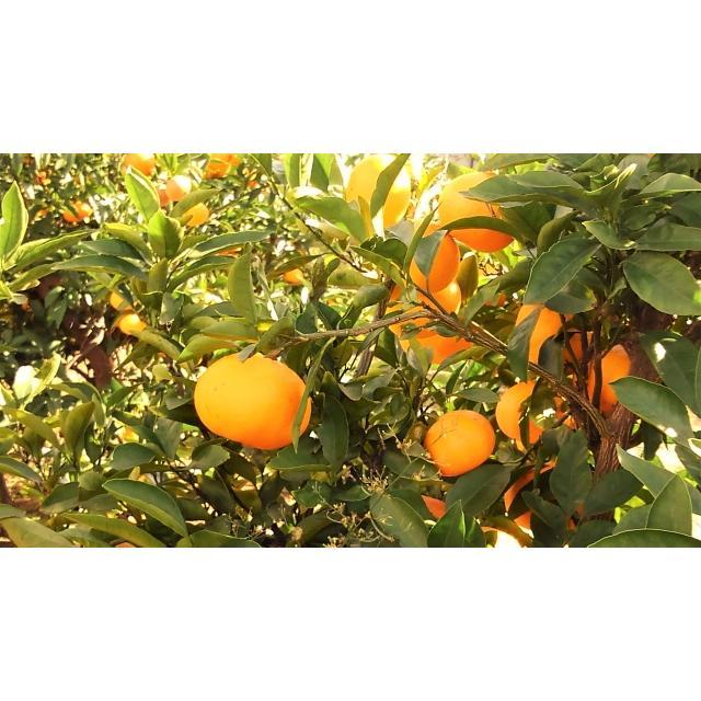 ナメクジ駆除用 殺虫剤 マイキラーL 500ml 農薬 メタアルデヒド水和剤 普通物 ka-dotcom 04