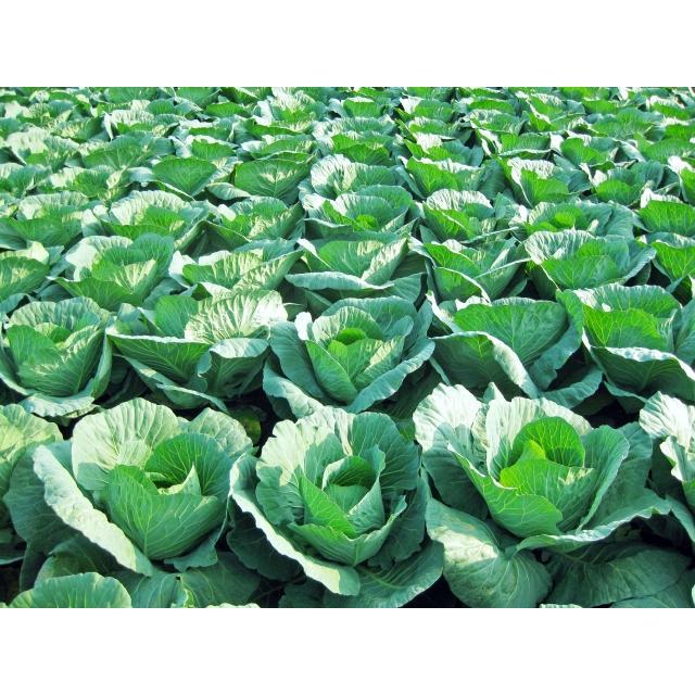 ナメクジ駆除用 殺虫剤 マイキラーL 500ml 農薬 メタアルデヒド水和剤 普通物 ka-dotcom 05