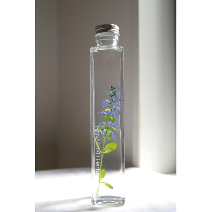 花咲くハーバリウム アジュガ レプタンサス  花、ガーデニング ハーバリウム (44693) kagoen-nursery