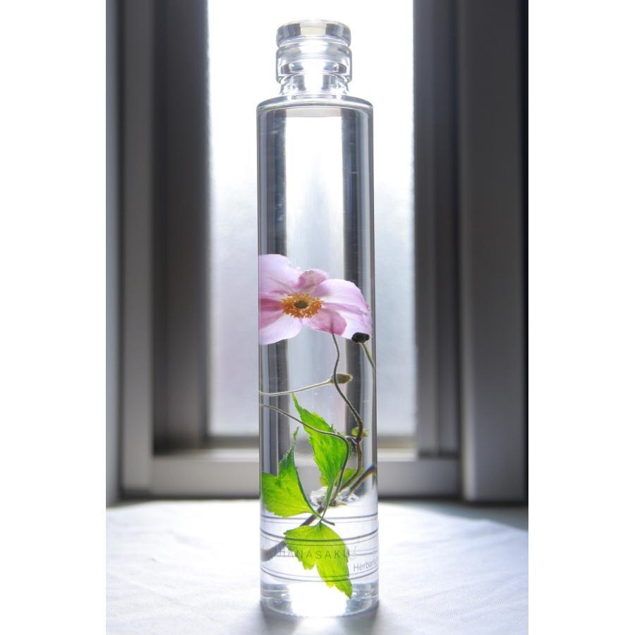 シュウメイギク 花咲くハーバリウム kagoen-nursery