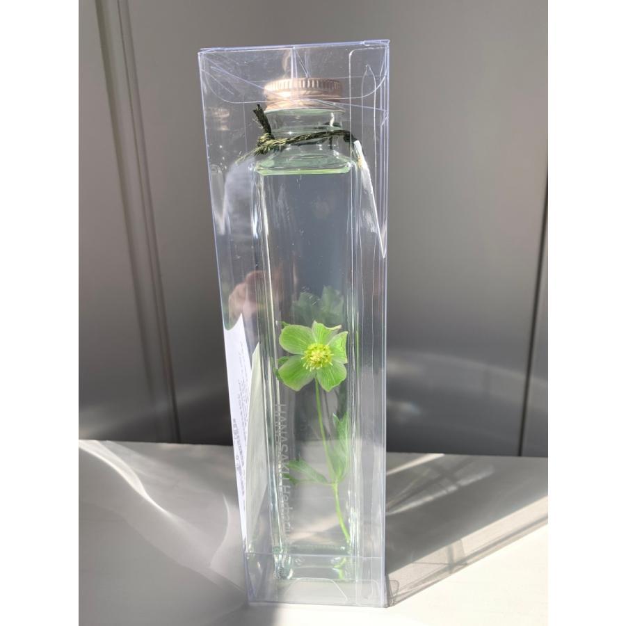 シュウメイギク 花咲くハーバリウム kagoen-nursery 02