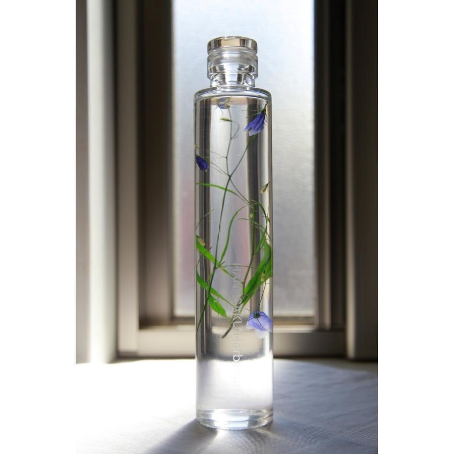 イワシャジン 花咲くハーバリウム 花、ガーデニング ハーバリウム (44693)|kagoen-nursery