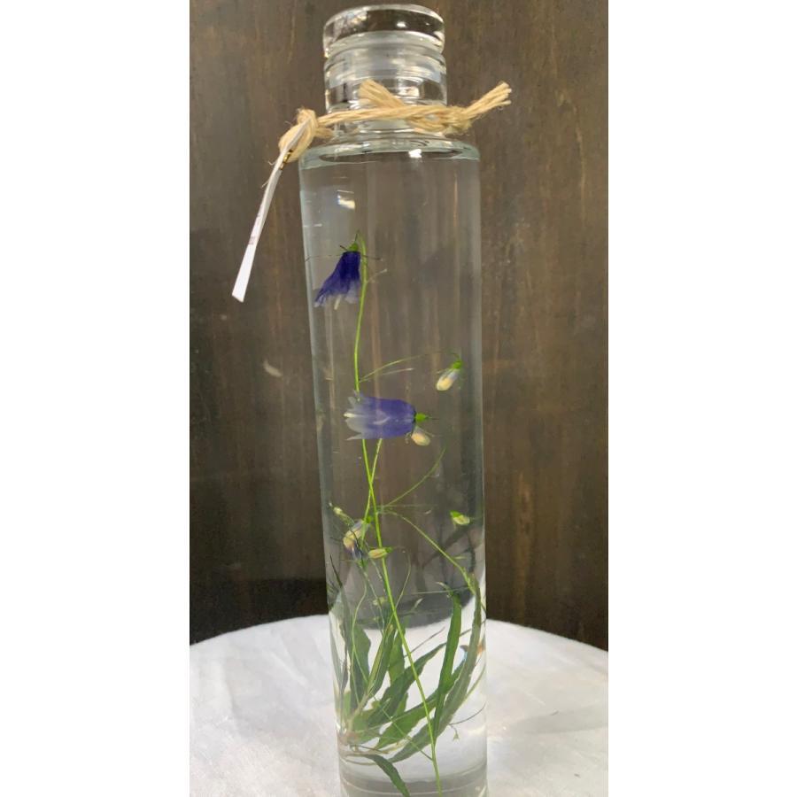 イワシャジン 花咲くハーバリウム 花、ガーデニング ハーバリウム (44693)|kagoen-nursery|02