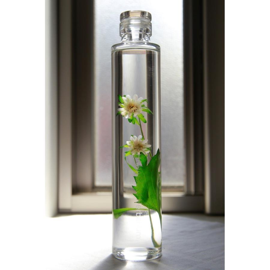 キク 花咲くハーバリウム 花、ガーデニング ハーバリウム (44693)|kagoen-nursery