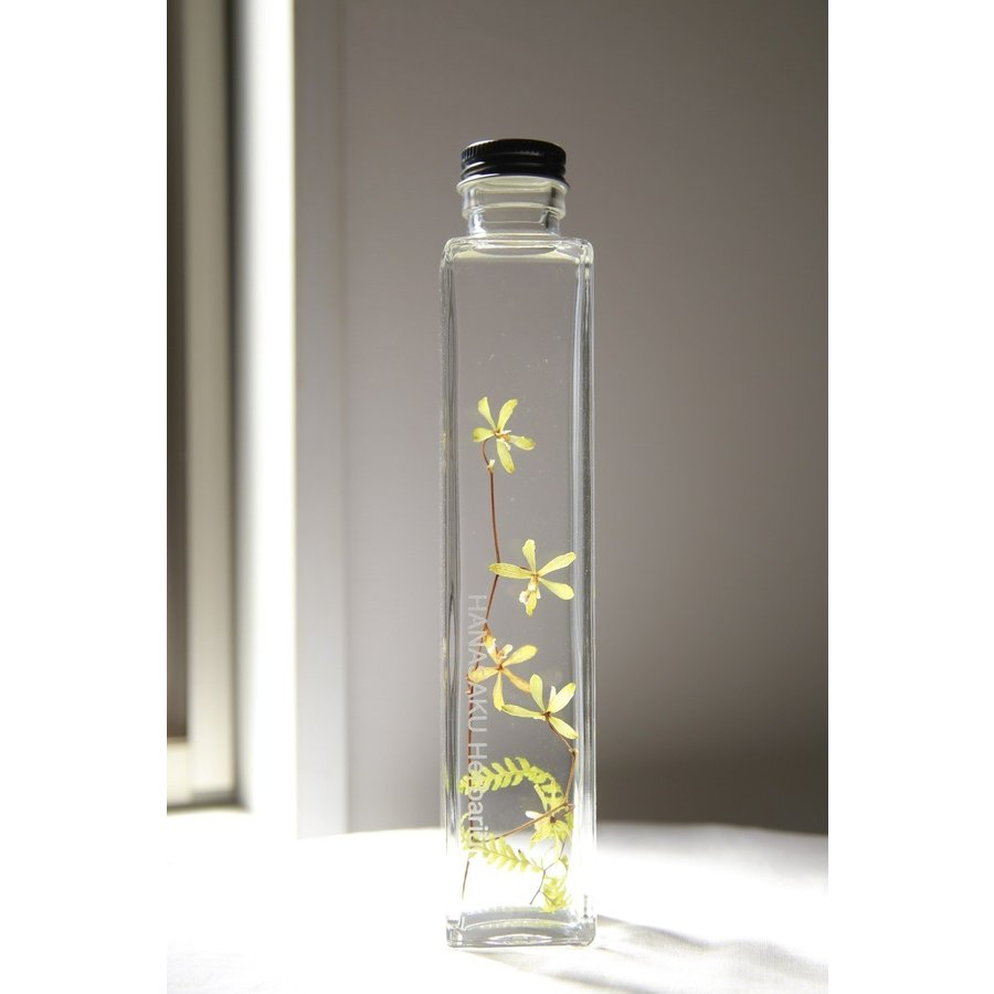Encyclia 花咲くハーバリウム kagoen-nursery