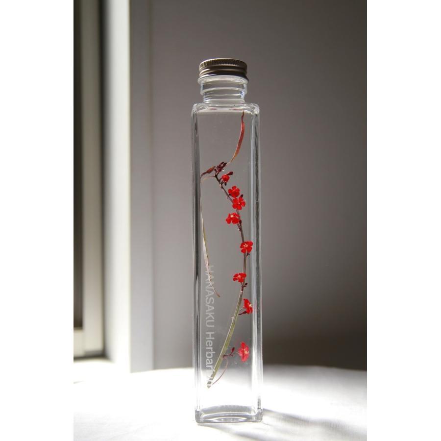 ユーフォルビア 花咲くハーバリウム花、ガーデニング ハーバリウム (44693)|kagoen-nursery