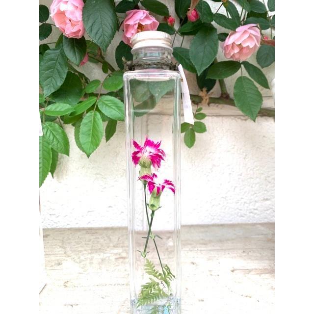 ナデシコ 花咲くハーバリウム 花、ガーデニング ハーバリウム (44693)|kagoen-nursery|05